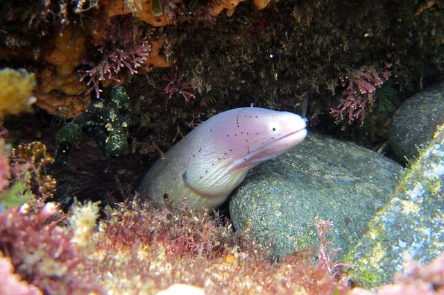 Moray Eel - Description, Habitat, Image, Diet, and Interesting Facts