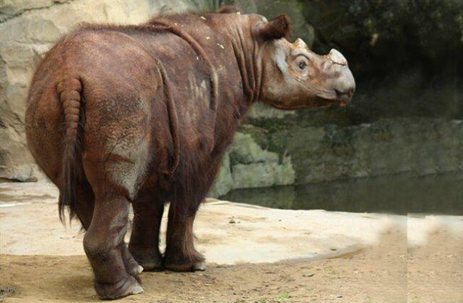 Rhinoceros Description Habitat Image Diet And Interesting Facts