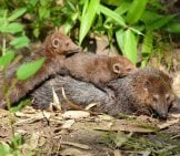 Weasel 5_Mother And Babies
