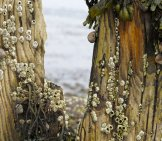 Barnacle 3_And Snails On Tree Stumps