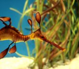 Sea Dragon 4