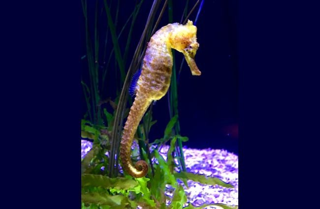 Seahorse facts!