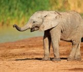 Baby_Elephant_In_South_Africa
