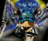 Tiger Beetle 2