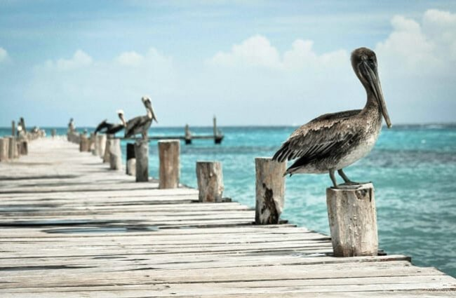 Pelicans sitting on the dock of the bay.