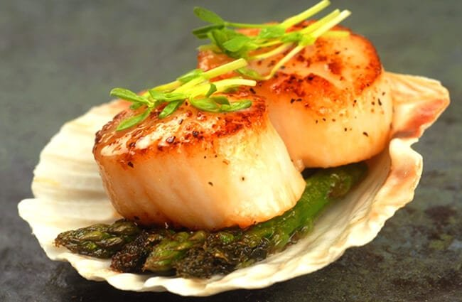 Pan-seared scallops served on a scallop shell. Photo by: (c) HHLtDave5 www.fotosearch.com