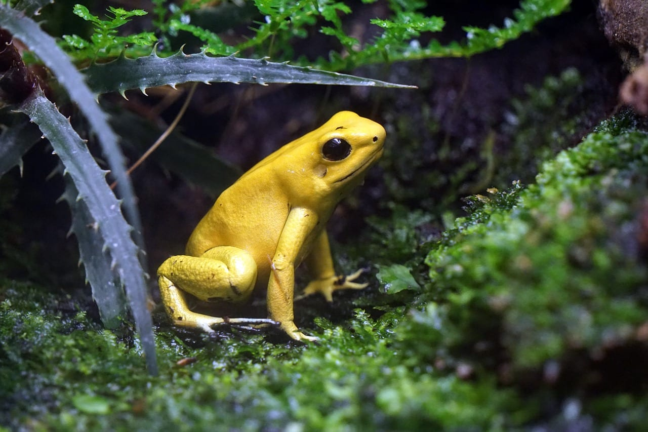 https://pixabay.com/en/frog-toxic-yellow-netherlands-1463831/
