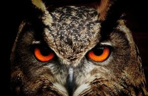 //pixabay.com/en/owl-bird-eyes-eagle-owl-birds-50267/