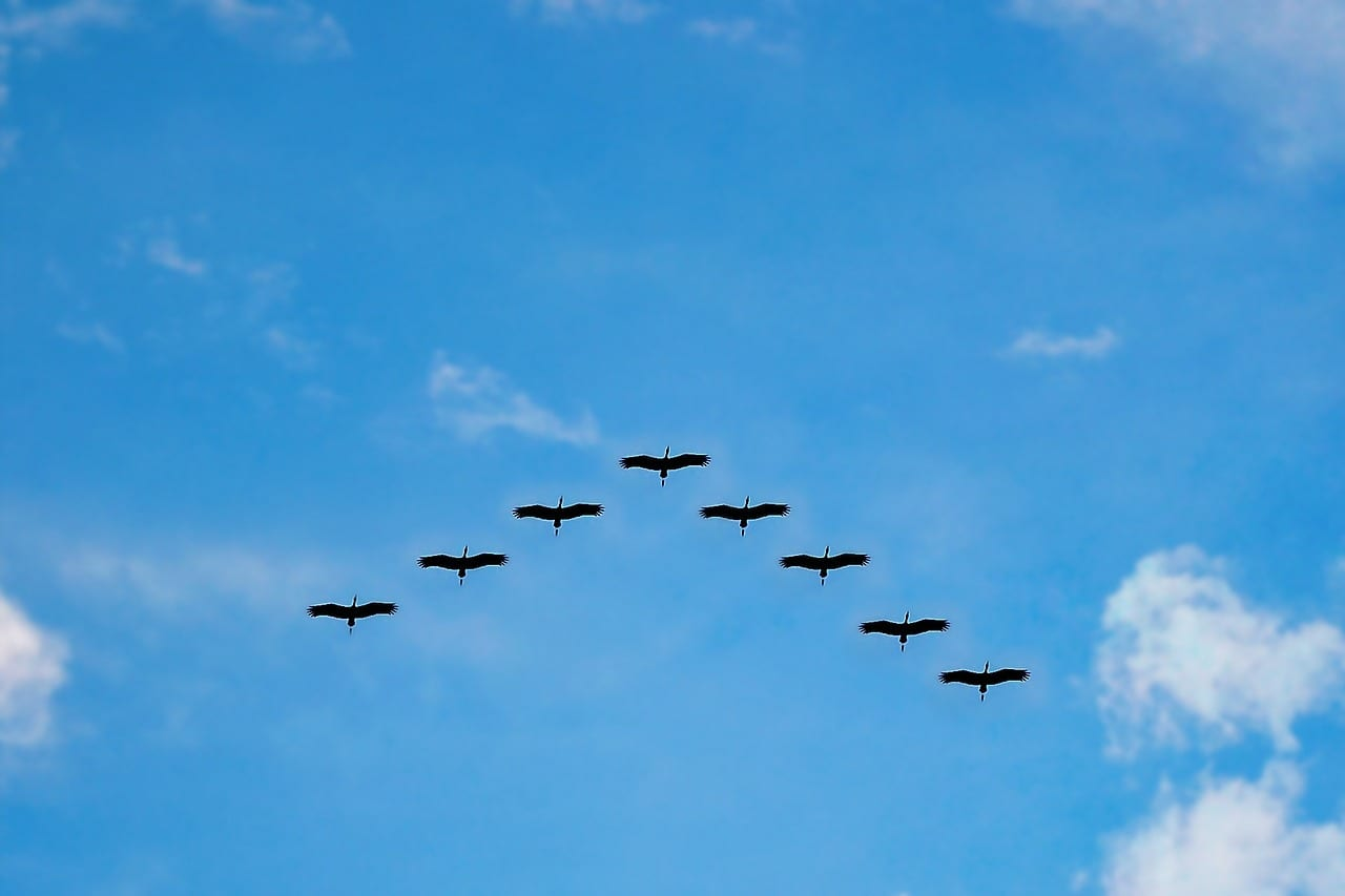 https://pixabay.com/en/birds-high-fly-flying-migrating-216827/