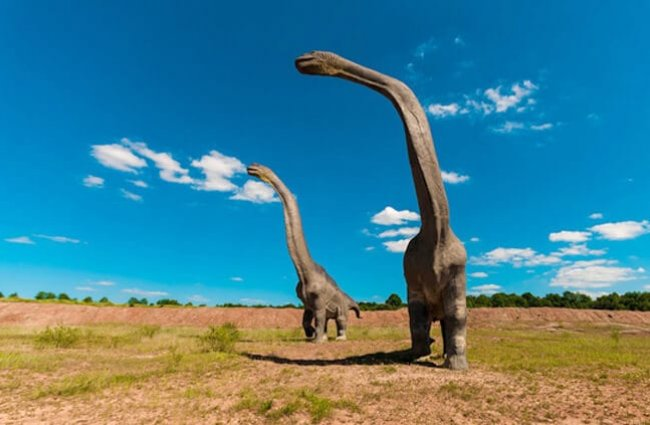 Illustration of a pair of Brachiosaurus on a flat plain.