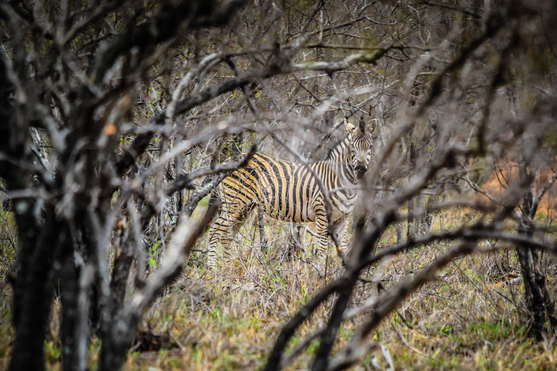 Camouflage: Hiding in Plain Sight from Predators and Prey