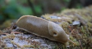 https://pixabay.com/en/banana-slug-wilderness-nature-1765275/