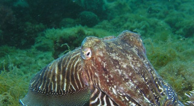 https://pixabay.com/en/squid-octopus-underwater-animal-225423/