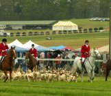 American Foxhounds At The Launch Of A Fox Hunt Photo By: Jack Kennard Cc By 2.0 Https://creativecommons.org/licenses/by/2.0