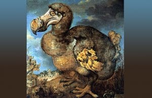 Jan Savery's painting of a dodo (1651)Photo by: Jan Savery [Public domain]