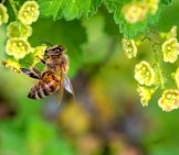 Honey Bee Balancing On A Small Flower Stem