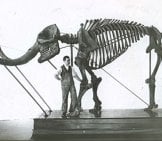 Mastadon Skeleton, Compared To Human Photo By: Smithsonian Institute