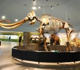 Mastadon Skeleton Photo By: Bill Abbott Cc By-Sa 2.0 Https://creativecommons.org/licenses/by-Sa/2.0