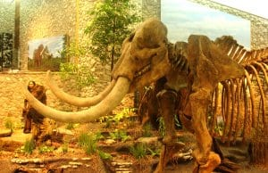 Image of a Mastadon in a museum settingPhoto by: Kevin SaffCC BY-SA 2.0 https://creativecommons.org/licenses/by-sa/2.0