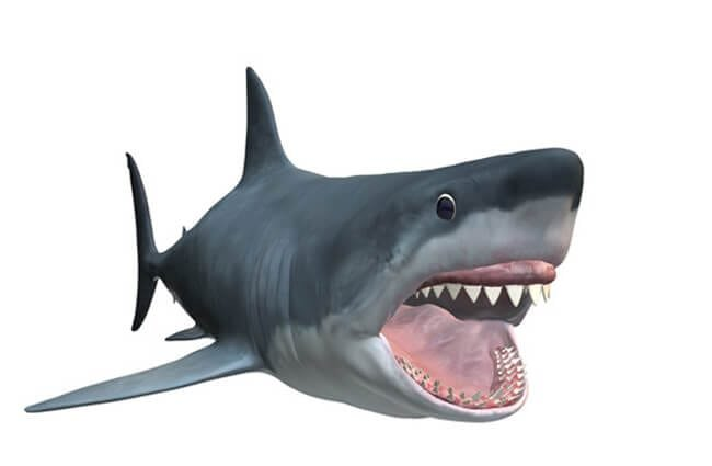 Illustration of a Magalodon shark. Photo by: (c) VAC www.fotosearch.com