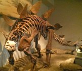 Stegosaurus Skeleton Image By: Eden, Janine And Jim Https://creativecommons.org/licenses/by-Sa/2.0/