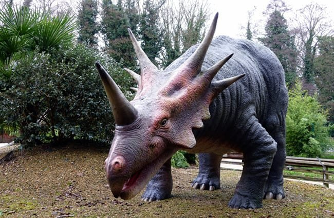 Replica of a Triceratops