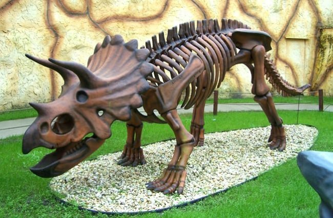 Replica of a Triceratops skeleton