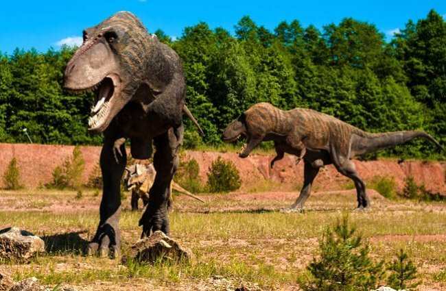 Tyrannosaurus Description Habitat Image Diet And Interesting Facts