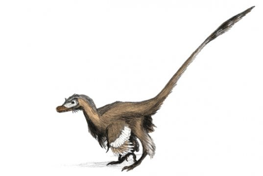 The vicious velociraptor was actually small and covered with feathers.Image by: Matt Martyniuk GFDL http://www.gnu.org/copyleft/fdl.html