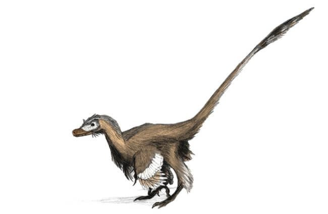 The vicious velociraptor was actually small and covered with feathers.Image by: Matt Martyniuk GFDL //www.gnu.org/copyleft/fdl.html