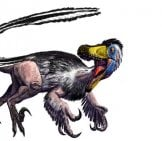 Fully-Feathered Velociraptor Image By: Luis V Rey Https://luisvrey.wordpress.com/2012/06/20/velociraptor/