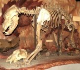 Cave Bear Skeleton, Hungarian Natural History Museum