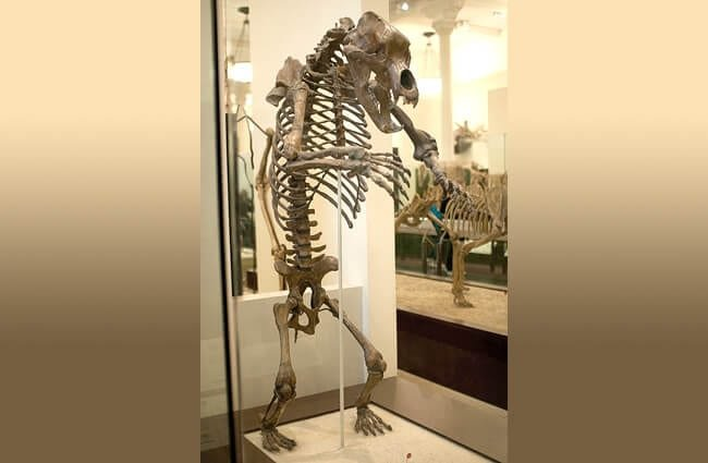 Cave Bear skeleton upright and menacing Photo by: Jan Dembowski CC BY 2.0 https://creativecommons.org/licenses/by/2.0