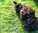 Puli Rolling In The Grassphoto By: Viteezhttps://creativecommons.org/licenses/by-Nc-Sa/2.0/