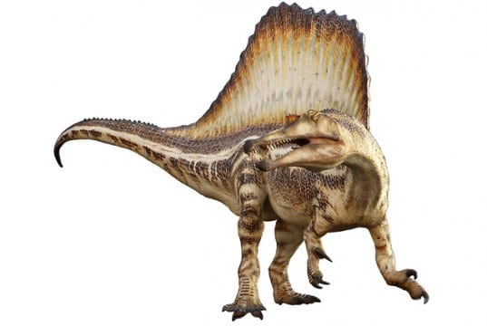 Drawing of a Spinosaurus