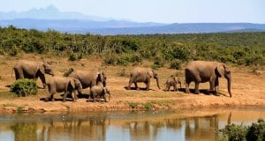 //pixabay.com/en/elephant-herd-of-elephants-279505/