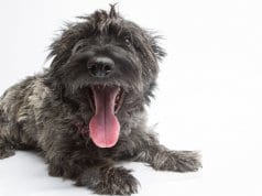 Shaggy Skye Terrier selfie!Photo by: The.Rohit//creativecommons.org/licenses/by-nc/2.0/