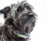 Shaggy Skye Terrier Haircut Photo By: The.rohit Https://creativecommons.org/licenses/by-Nc/2.0/