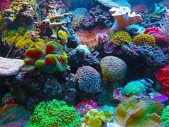 //pixabay.com/photos/coral-coral-reef-reef-sea-567688/