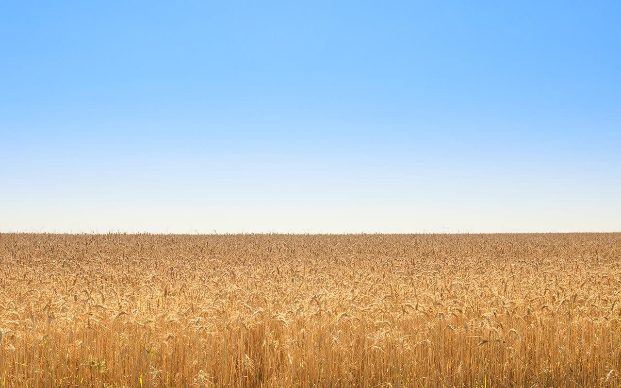 https://pixabay.com/photos/golden-field-wheat-blue-sky-nature-2227661/