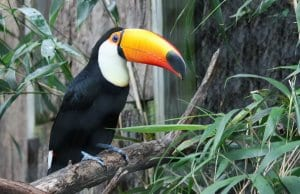 //pixabay.com/photos/toucan-bird-jungle-zoo-exotic-281491/
