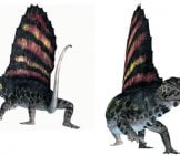 Dimetrodon Drawing Image By: (C) Catmando Www.fotosearch.com