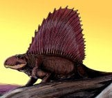Dimetrodon Imageimage By: Dmitry Bogdanov Cc By 3.0 //creativecommons.org/licenses/by/3.0