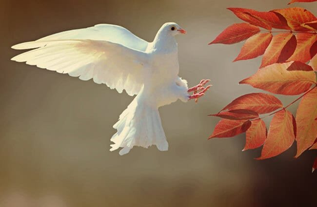 Stunning White Dove landing on a branchPhoto by: cocoparisienne, Public Domainhttps://pixabay.com/photos/dove-bird-animal-feather-plumage-2516641/