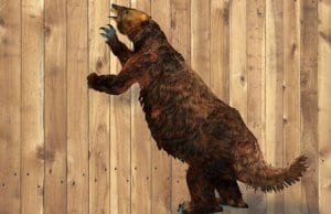 Giant Ground Sloth that lived in Central and South AmericaImage by: (c) Catmando www.fotosearch.com
