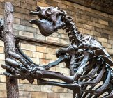Giant Ground Sloth At The Natural History Museum - London Image By: Markus Trienke Cc By-Sa 2.0 Https://creativecommons.org/licenses/by-Sa/2.0