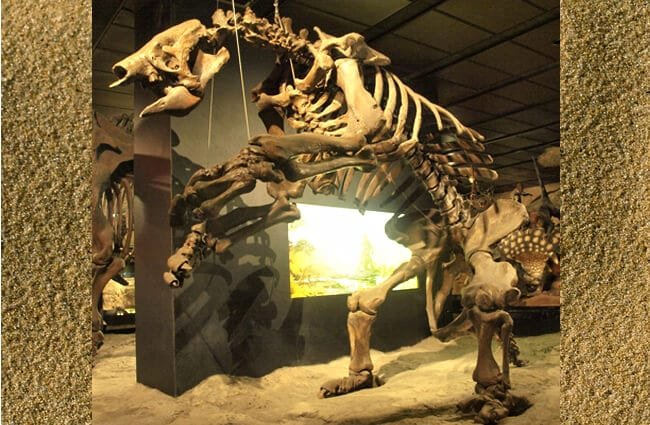 "Giant Ground Sloth skeleton Image by: Wikipedia Loves Art participant ""Kamraman"" CC BY-SA 2.5 https://creativecommons.org/licenses/by-sa/2.5"