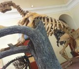 Giant Sloth Skeleton In Museu Nacional, Rio De Janeiro Image By: João De Deus Vidal Jr Cc By-Sa 4.0 Https://creativecommons.org/licenses/by-Sa/4.0