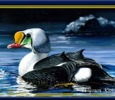 King Eider Painting By 16-Year-Old Si Youn Kim Photo By: U.s. Fish And Wildlife Service Northeast Region, Public Domain