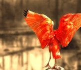A Stunning Portrait Of A Scarlet Ibis